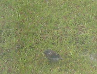 wet_bird.jpg